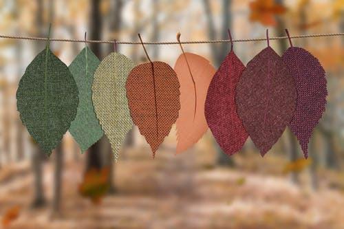 Autumn Leaves, Fall