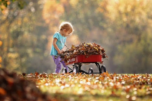 Child with wagon full of fallen leaves