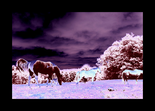 horse_scape