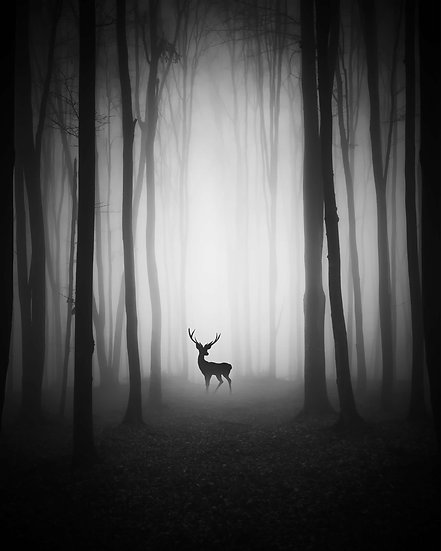 ENCOUNTER IN THE FOREST