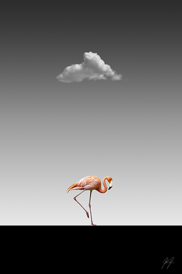 FLAMINGO CATWALK