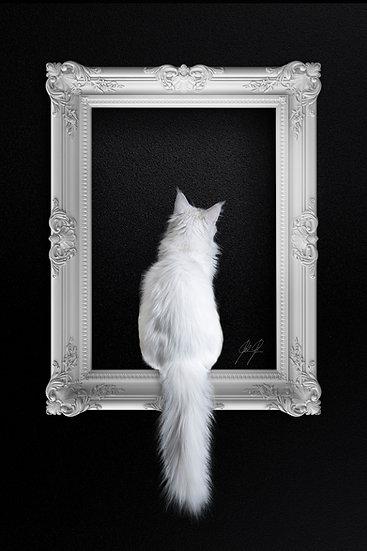 CAT IN FRAME