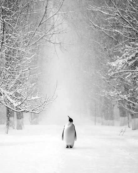 PINGU LOOKING FOR MORE SNOW