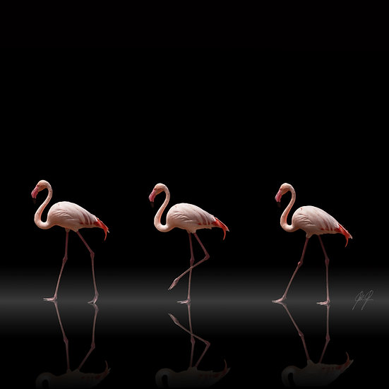 FLAMINGO PARADE