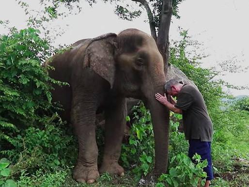 El efecto de la música sobre los elefantes
