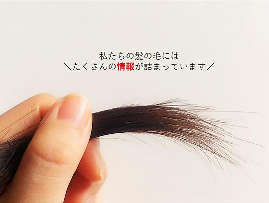 毛髪情報画像.png
