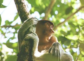 Next ecological Amazon trip announced