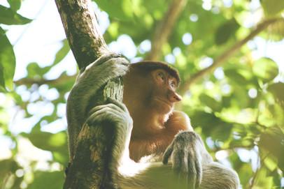Monkey Holding Tree