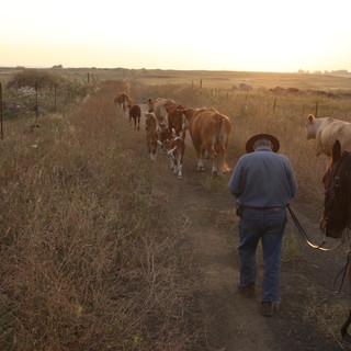 Cowboy and a Horse Ariel Zukerman.jpg
