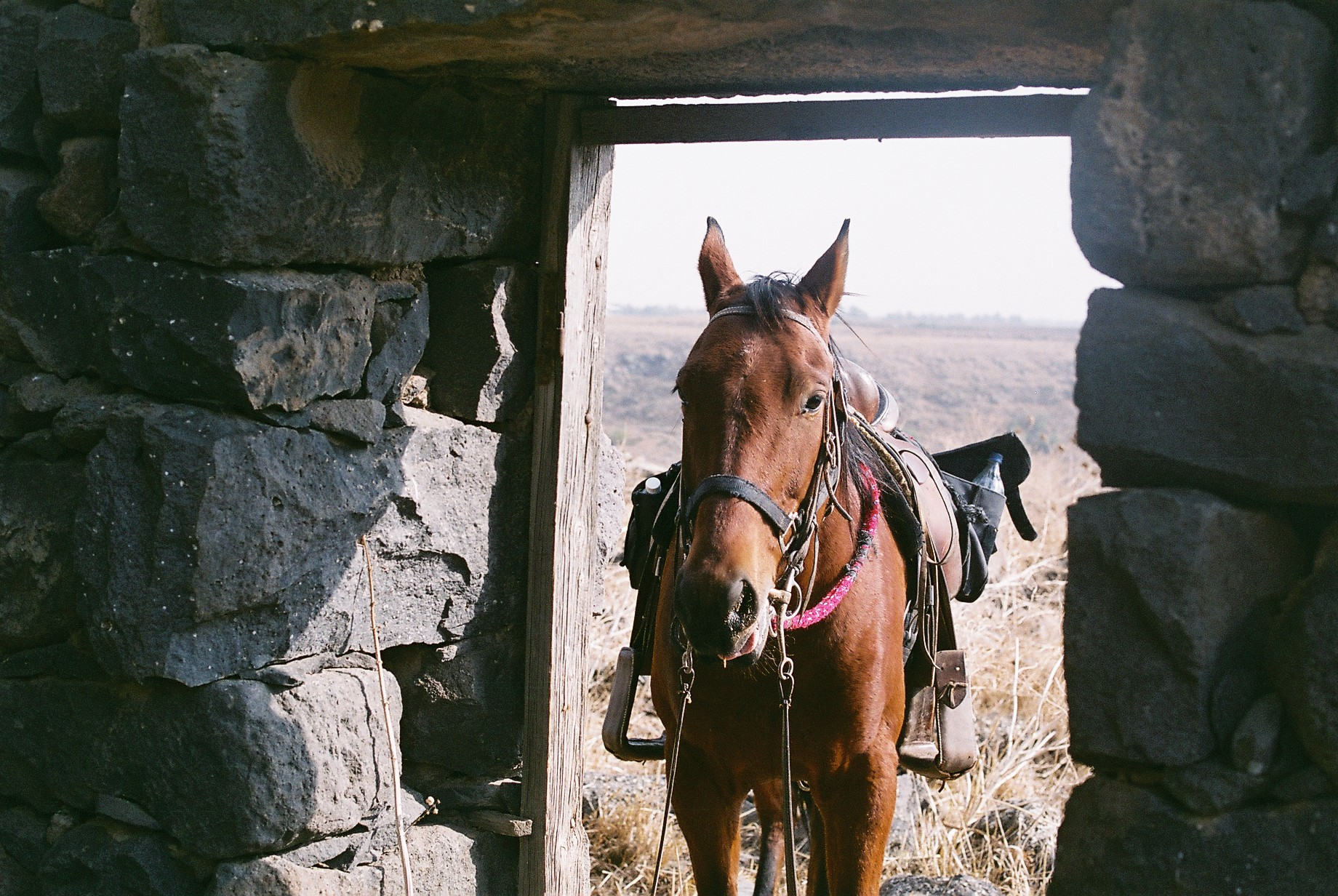 Horse on the door Film by Arielzuk