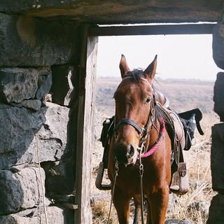 Horse on the door Film by Arielzuk.JPG
