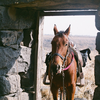 Horse on the door Film by Arielzuk.JPG