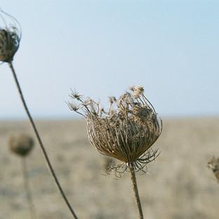 Dry Thorn Film Arielzuk.JPG