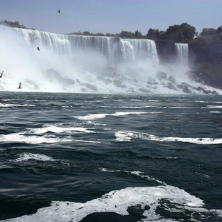 Seagull at Niagra Falls by Ariel Zukerman