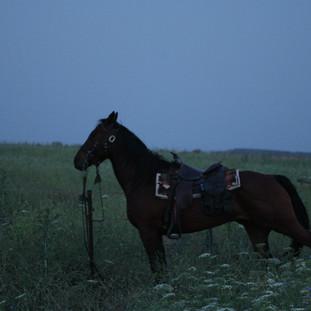 סוס עושה מתיחות בוקר אריאל צוקרמן.jpg