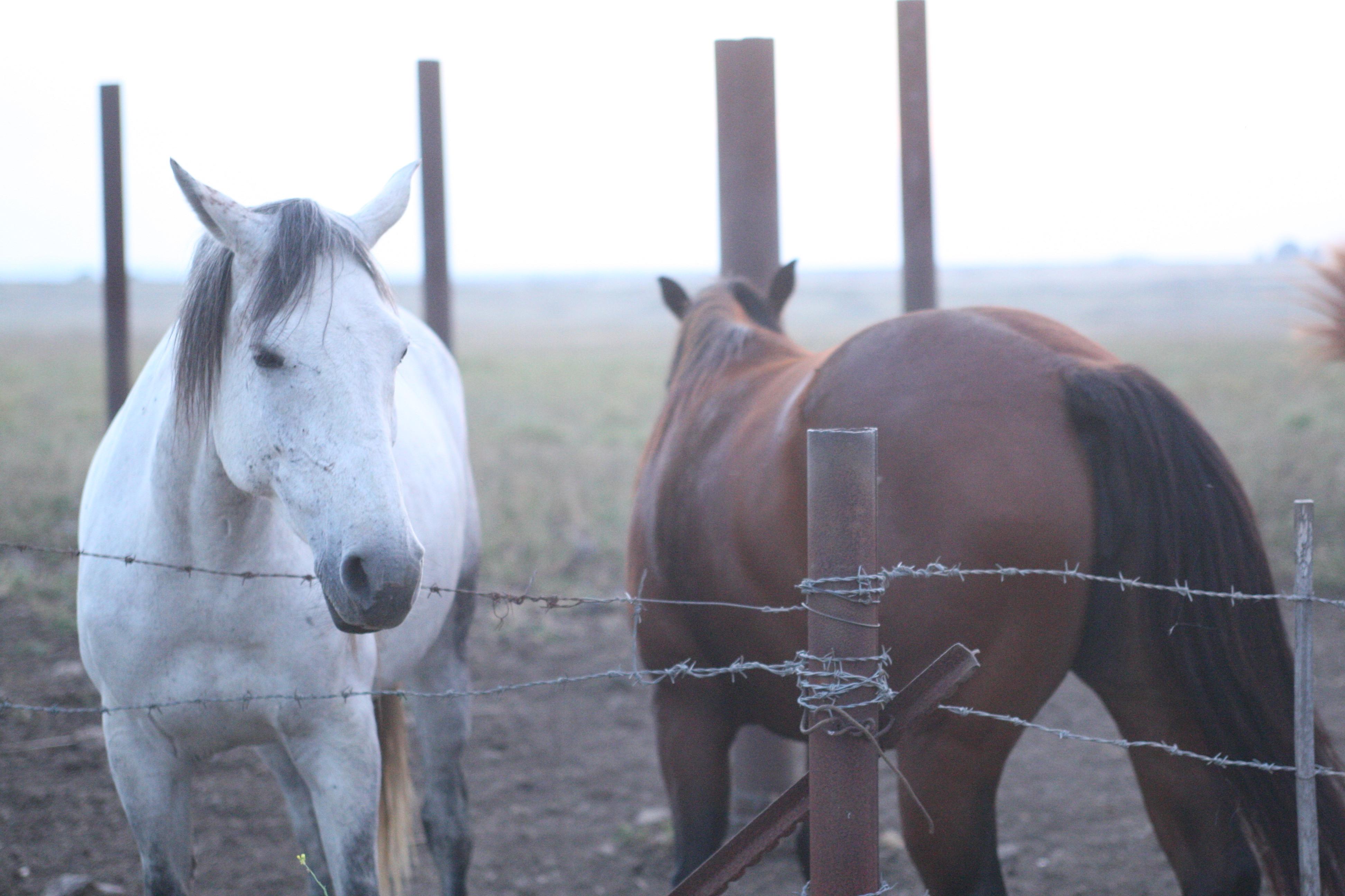 Horses at Golan Hights Arielzuk