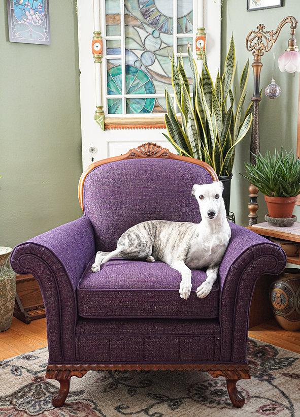 upholster-chair-purple-grayhound.jpg