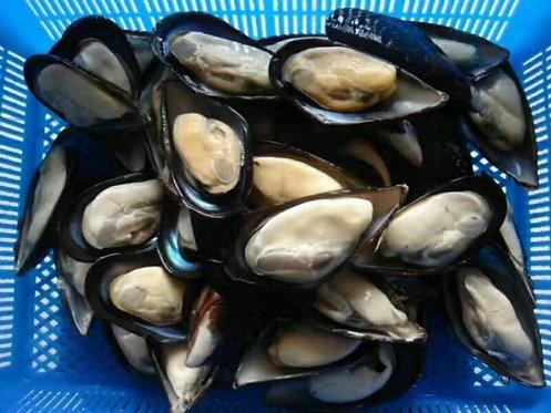 Frozen Half Shell Mussels