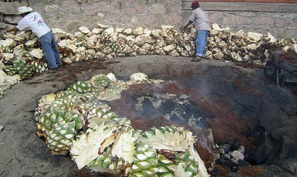 Roasting The Agave
