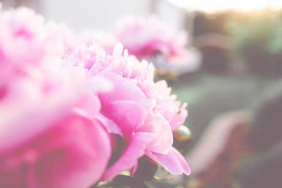 Canva - Selective Focus Photography of P