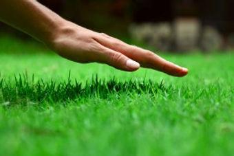 hand-on-grass-300x200.jpg
