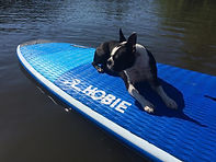 Bailey on paddleboard