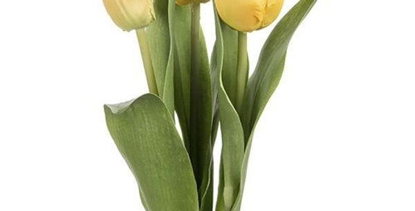 Tulip Mix Yellow