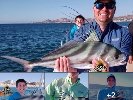 Numerous Roosterfish today