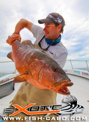 Dogtooth Snapper
