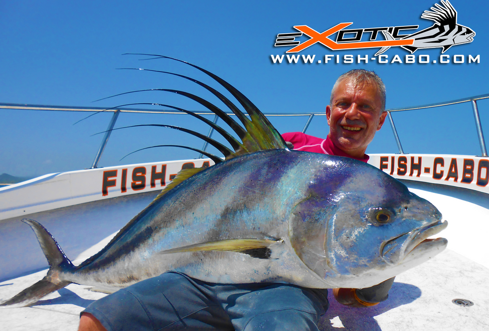 Giant Rooster Fish