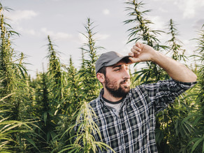 New hemp operations face more barriers than consumers may realize
