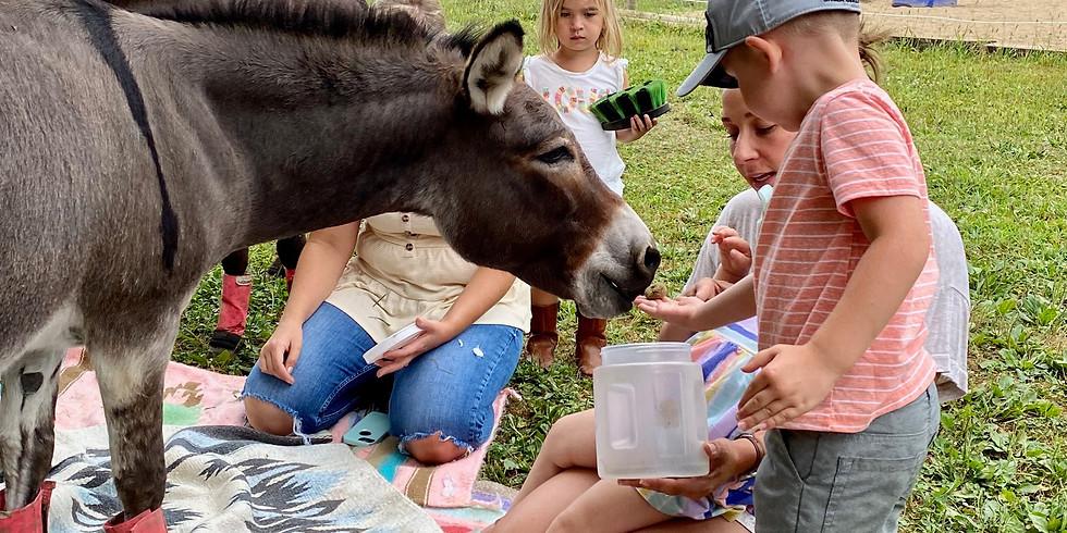 Donkey Days