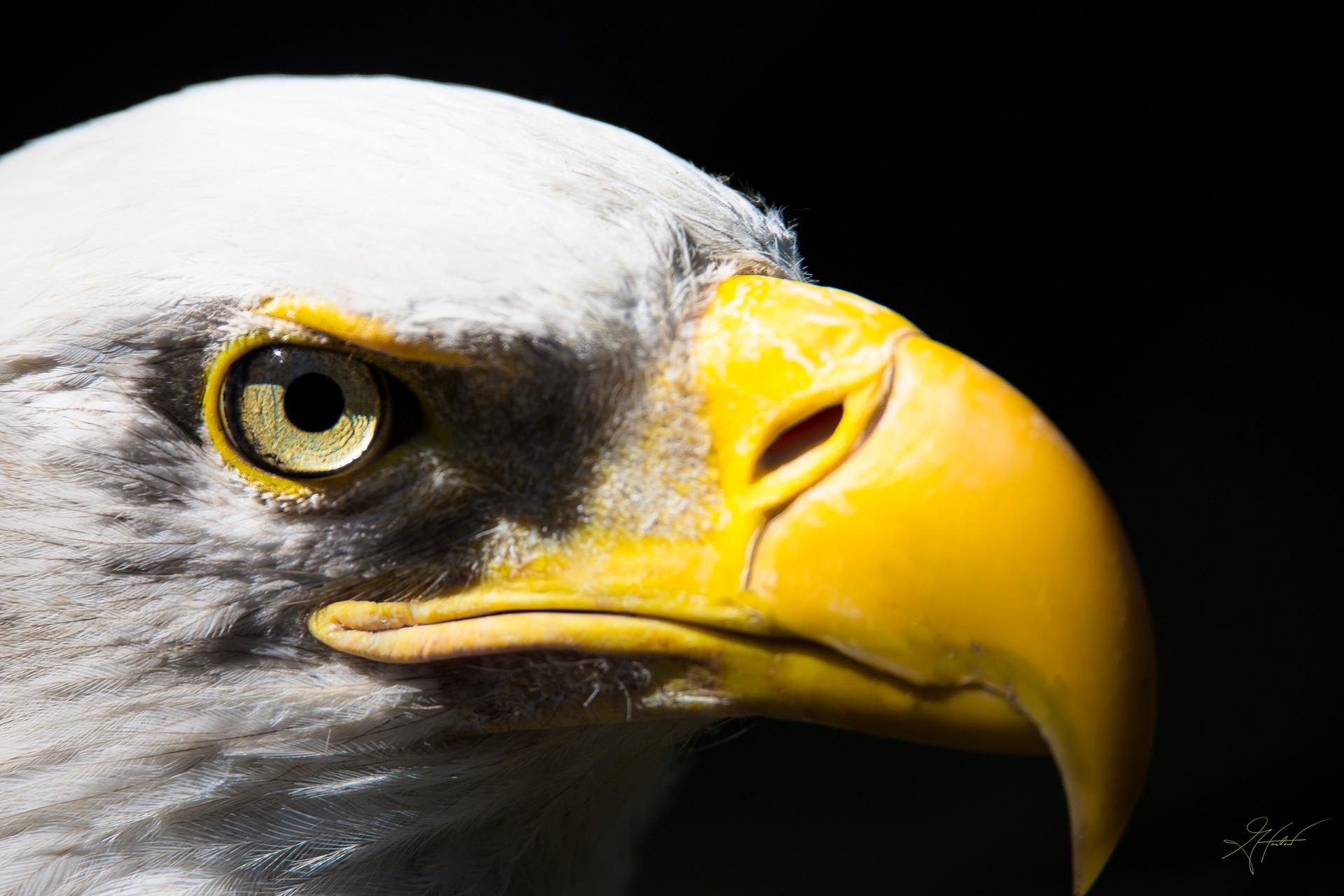 Greg Harlow Media Photography
