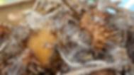 Produção sementes hotaliças orgânicas agroecologia documentário filme pedagógico