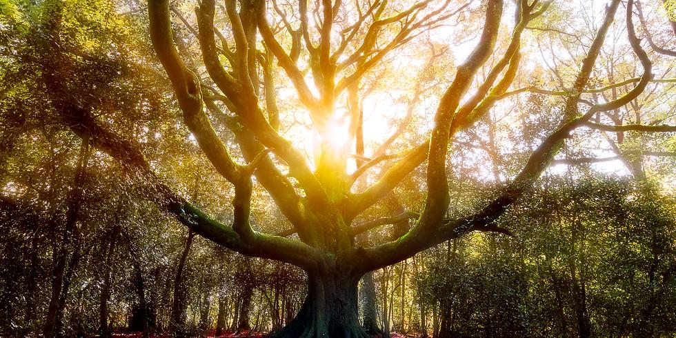 Cercle celtique en forêt de Broceliande avec Arnaud Colin