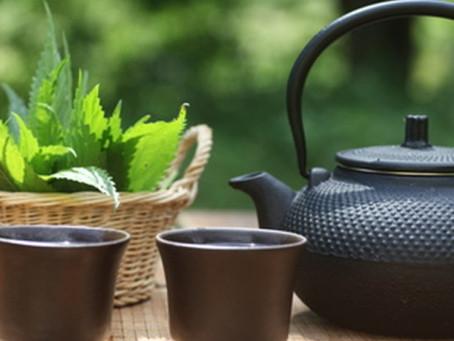 Ten Benefits of Nettle Tea