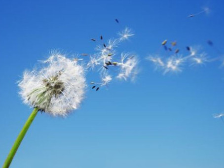 Tips For Hay Fever