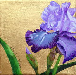 Golden Purple Iris