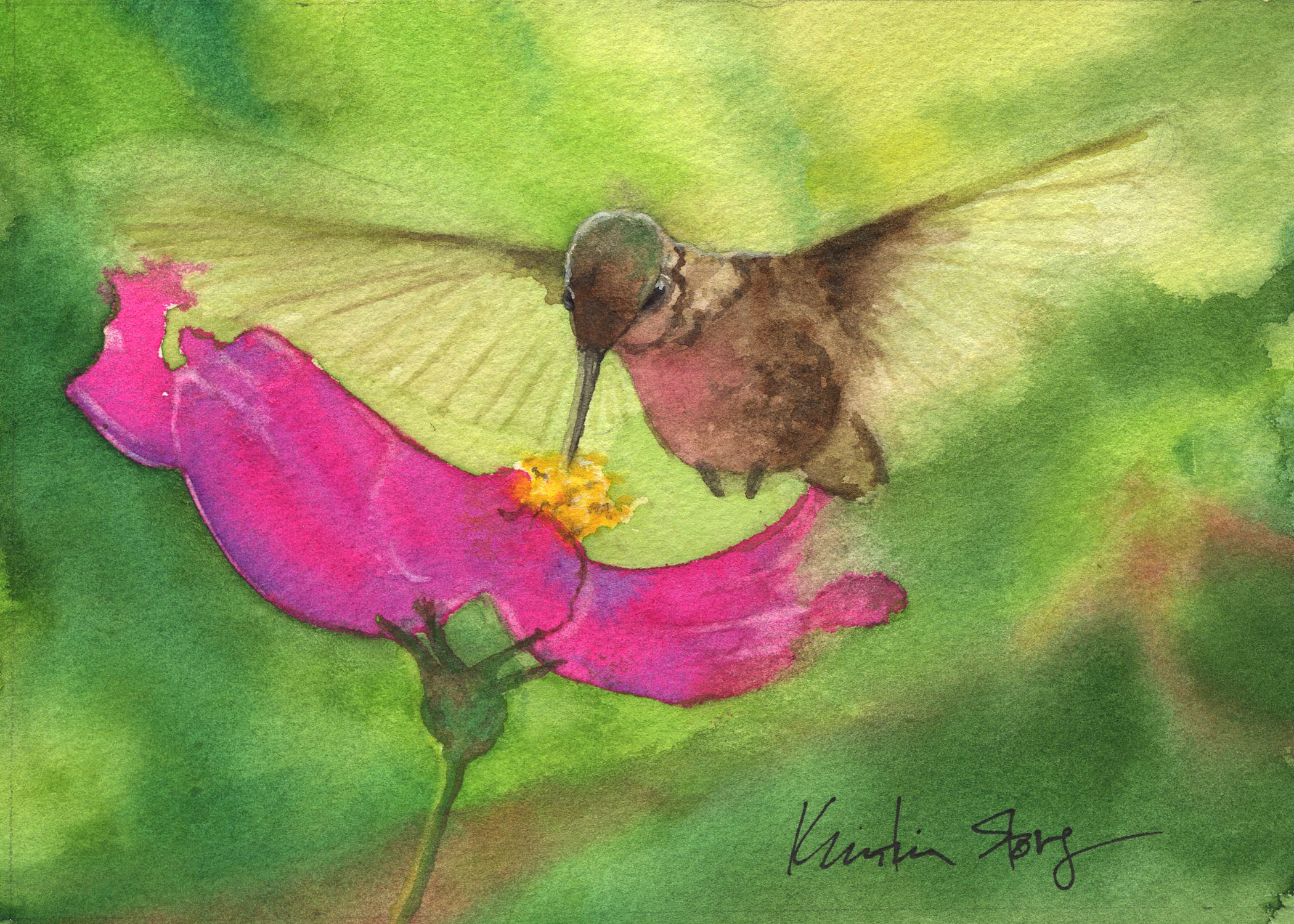 Hummingbird Cosmos