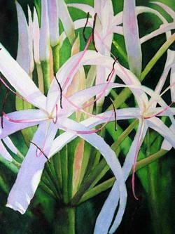 Lily Whites