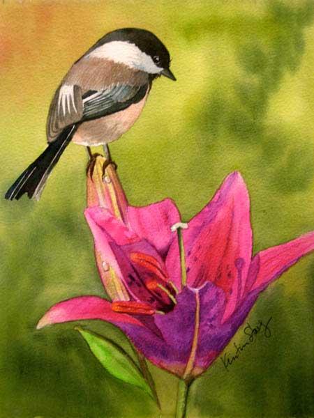 Chickadee-Spring
