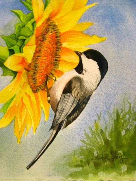 Chickadee-Summer