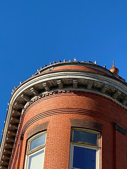 birdbuilding.png