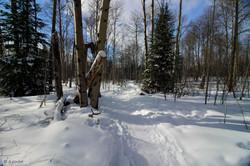 2018-02-06 13-46-16 skiwanis