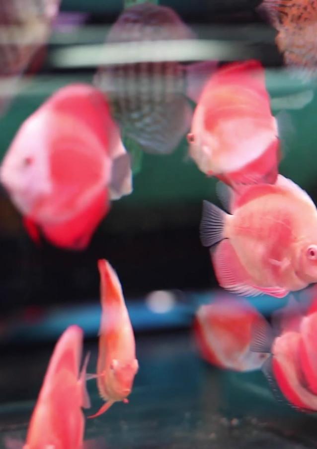 Block Head Bitch Fish Video