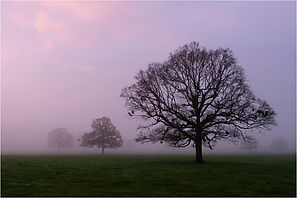 03 Trees in Vanishing Morning Mist.jpg