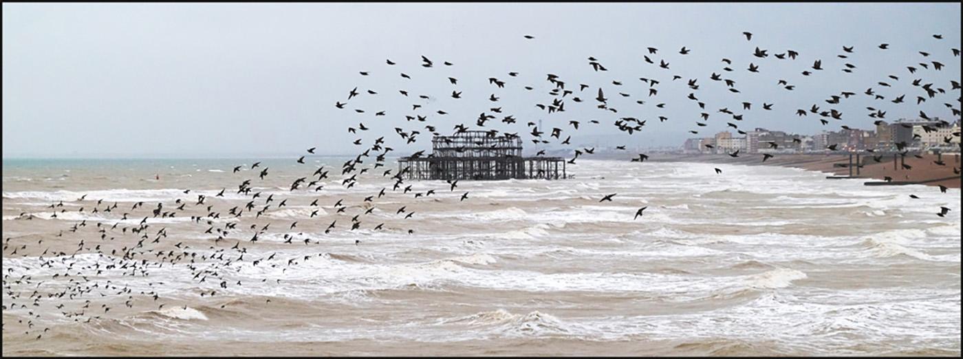 Brighton Birds
