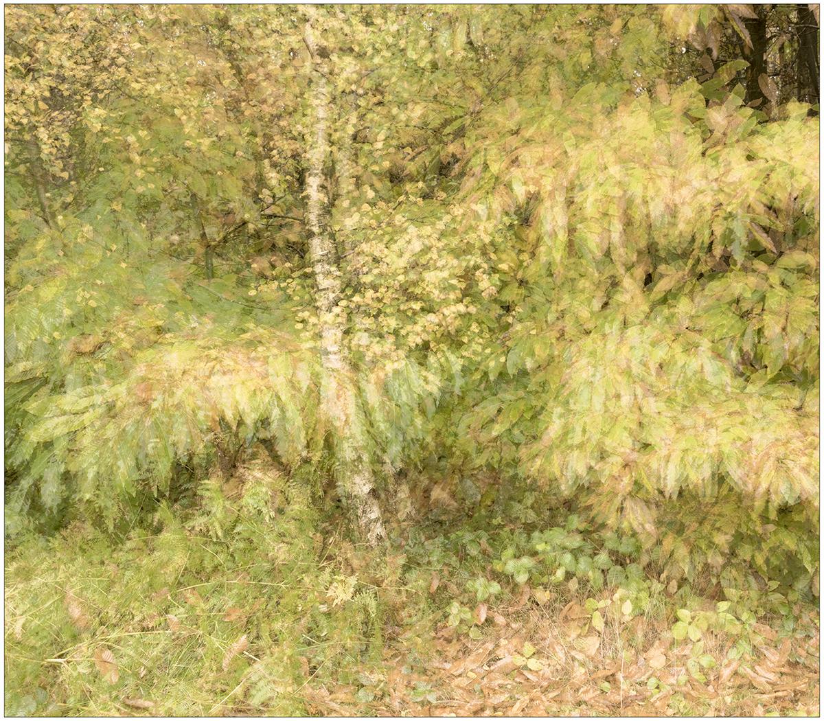 Autumn, Multiple Exposure In Camera