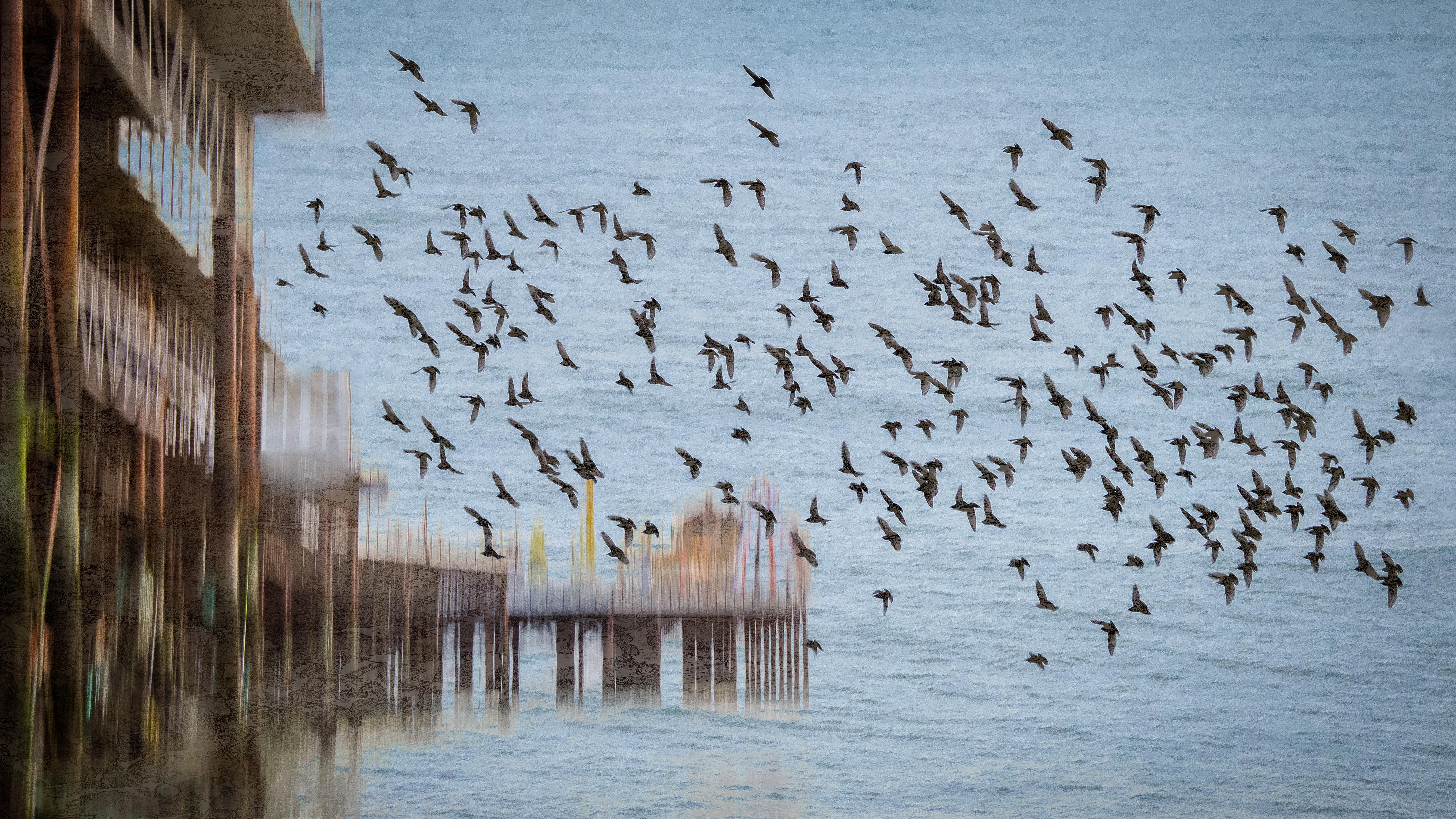 Pier and Murmuration