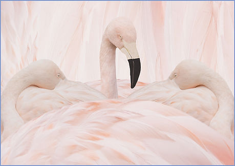 028 Flamingo Closeness.jpg
